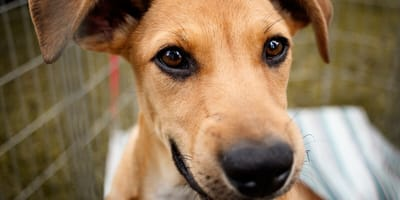adoptar cachorro navidades prohibido