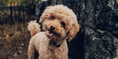 Si può usare l'Imodium® per la diarrea del cane?