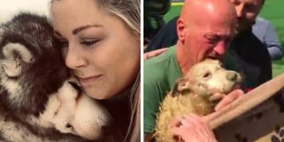 10 historias sobre perros que nos hicieron llorar en 2019