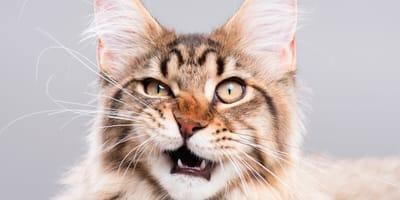 Koty potrafią stroić miny - to tylko my nie potrafimy ich odczytywać!