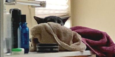 Kotek w roli Yody