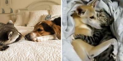 perro y gato amor