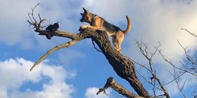 Hund und Katze im Baum