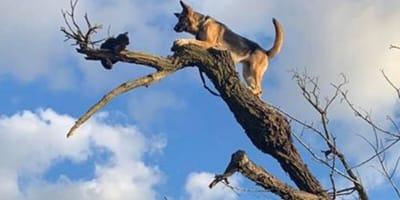 Cat and dog stuck up tree