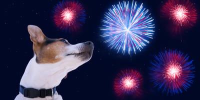 cane-guarda-fuochi-d'artificio