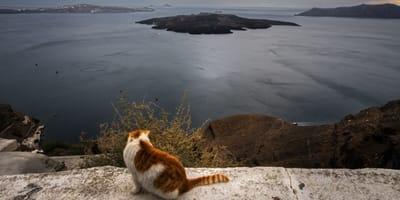 gatto-osserva-il-mare