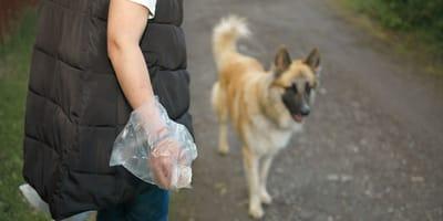 Fragen und Antworten zum Thema Hundekotbeutel
