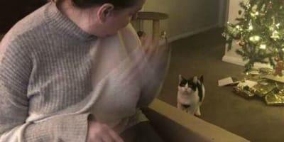 Katze schaut ihrer Besitzerin zu