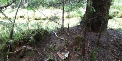 Spaziergänger findet an Weihnachten eine Pappschachtel im Wald. Doch ein Geschenk sieht anders aus!