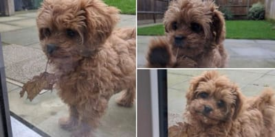 The cutest pooches on the internet this week