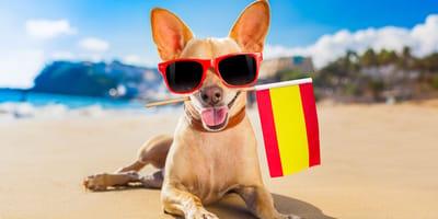 Spanische Hundenamen und ihre Bedeutung