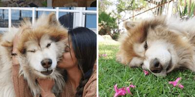 malamute y mujer