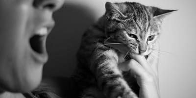 Gattino che morde mano del padrone