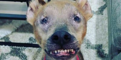 Chupey_pies_usmiech_zeby