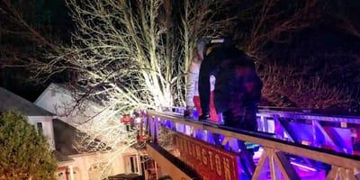Feuerwehrleiter an Baum