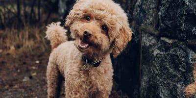 cane con testa inclinata