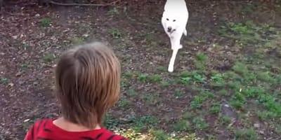 Hund läuft auf einen Jungen zu