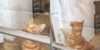 Cat opens door for owner