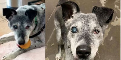 Playful, 19-year-old shelter dog just wants a forever home