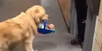perro con bebe en la boca