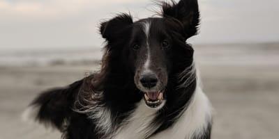 si possono portare i cani in spiaggia