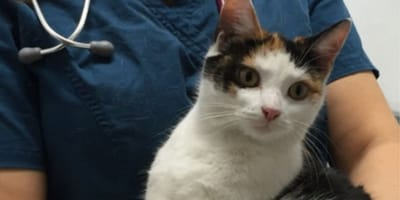 Appeal to find owners of adventurous kitty who traveled 130 miles in a car engine