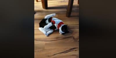 Kot_w_swiatecznym_swetrze_lezy_na_ziemi