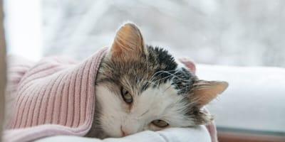 5 Remedios caseros para curar la gripa de tu gato