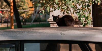 Ein Kätzchen auf einem Auto