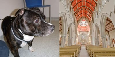 Dog abandoned in church