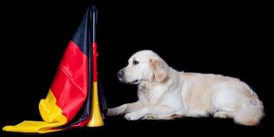 Deutsche Hundenamen sind beliebt und leicht auszusprechen