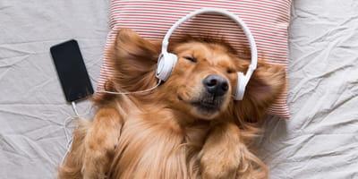 Musicoterapia: relaja a tu perro de manera natural