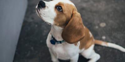 Consigli per scegliere un'alimentazione naturale per cane con struvite