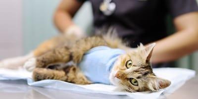 Wichtige Informationen zur Kastration von Katzen und Katern