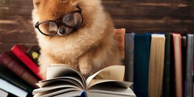libros perro reyes magos