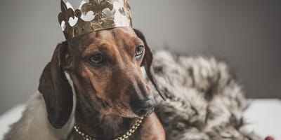 perro día de reyes