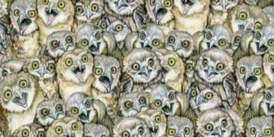 Kätzchen hat ein Versteck unter Eulen: Nur Menschen mit Adleraugen finden es!