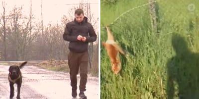 Ein Gassigänger entdeckt einen Fuchs-Welpen