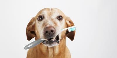 5 remedios caseros para el mal aliento de los perros