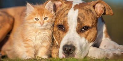 10 buoni propositi da adottare nel 2021 se hai un cane o un gatto