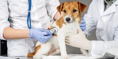 esterilizar perro gratis nuevo laredo