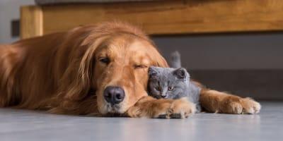 Los perros y los gatos se llevan mal: ¿qué hay de mito y qué de realidad?