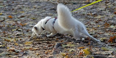 Quale pettorina scegliere per i cani che tirano?