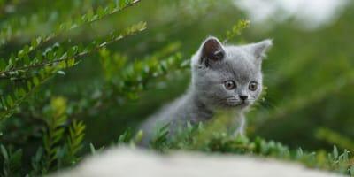 gatitos de raza abandonado