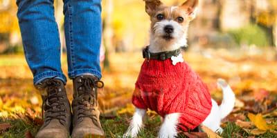 hacer ropa para perro