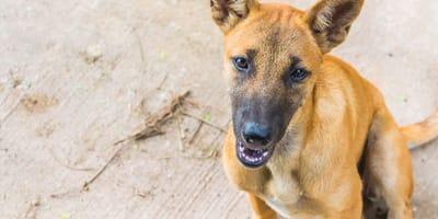 perros callejeros seran policias