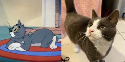 tom and jerry and battersea rescue cat