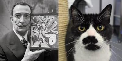 dali and moustache cat