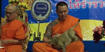 un-monaco-buddista-con-un-gatto