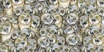 Cat is impossible to find amongst the owls: Do YOU see it?